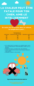 canicule attention à vos animaux