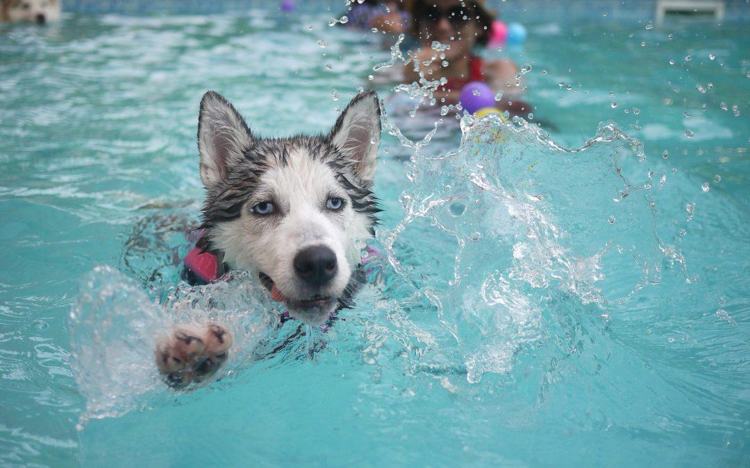 Les sports nautiques avec votre chien, attention à la noyade