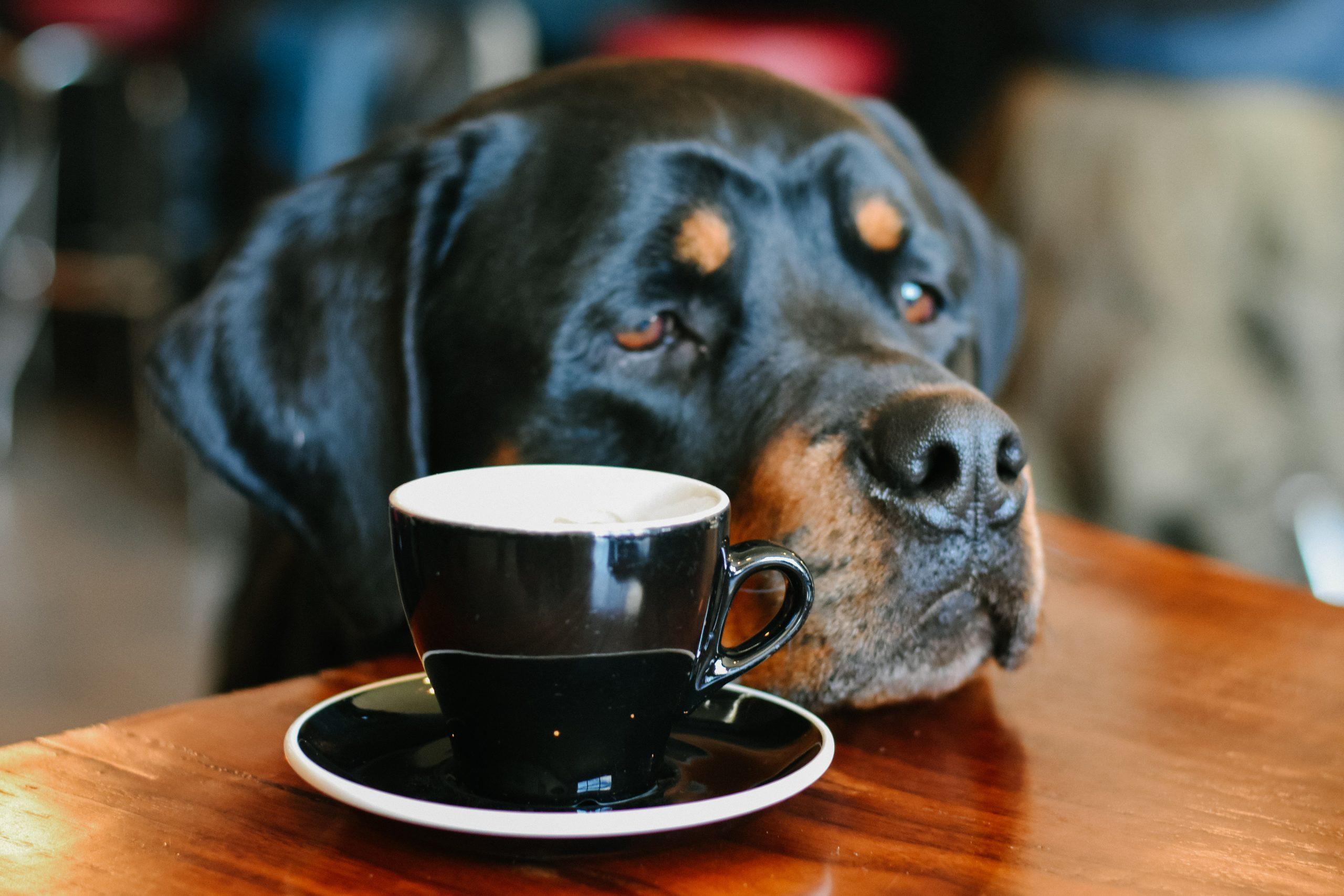 café rencontre Lynne Pion deuil animalier